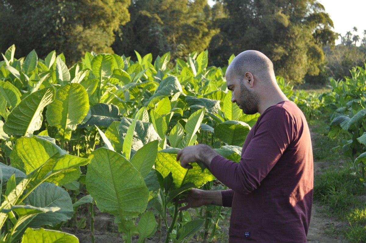Tabachny plantatcii Cuba (10)