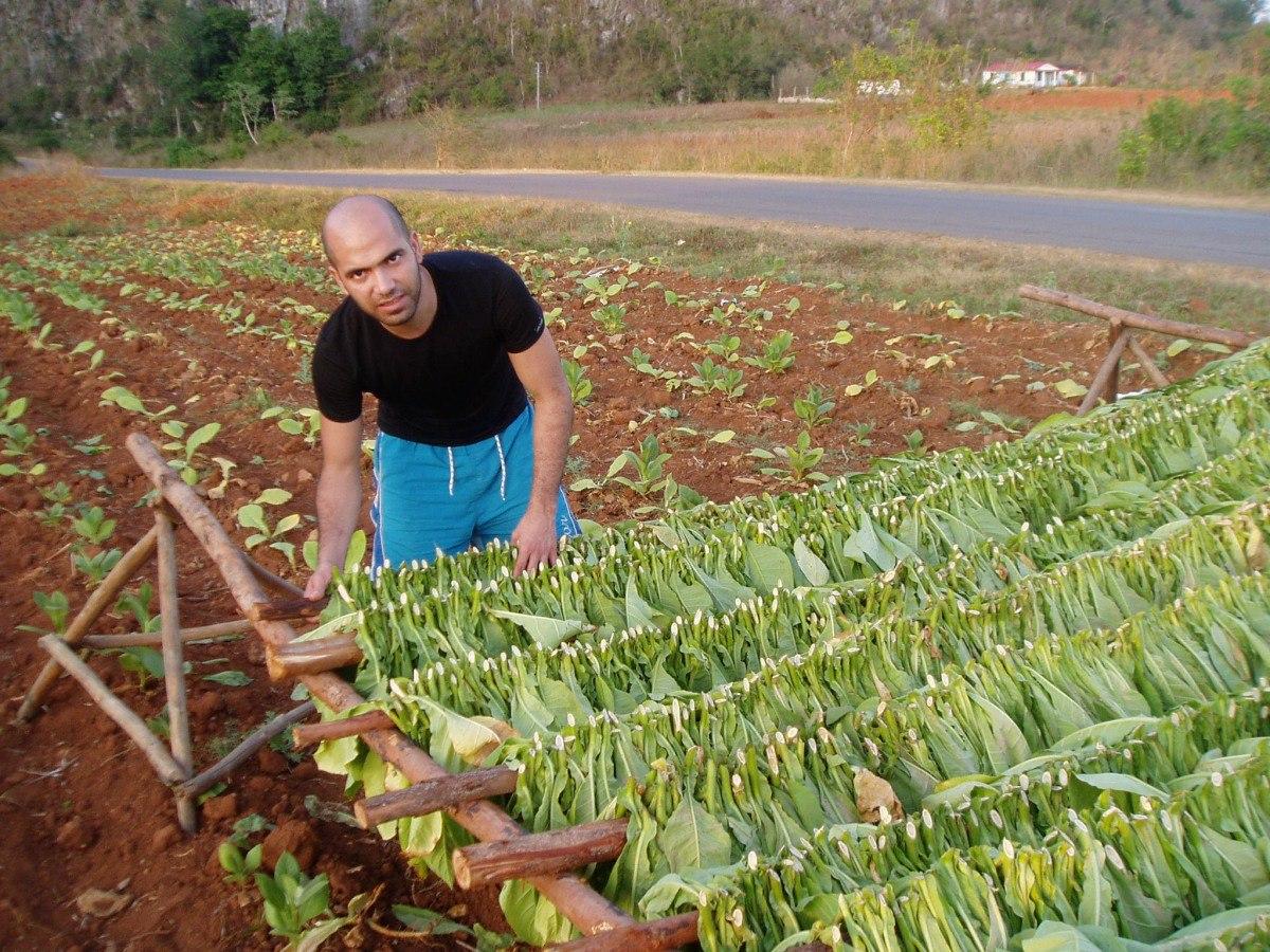 Tabachny plantatcii Cuba (14)