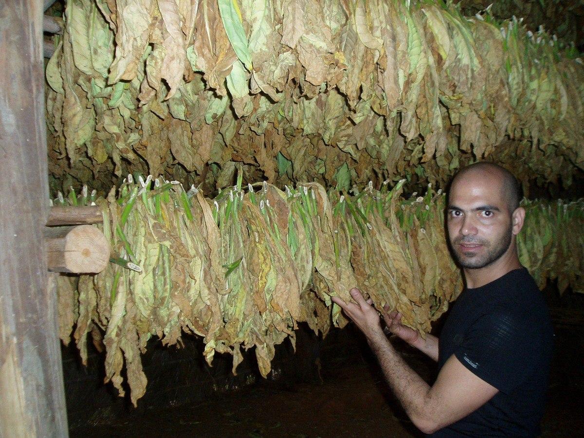 Tabachny plantatcii Cuba (15)