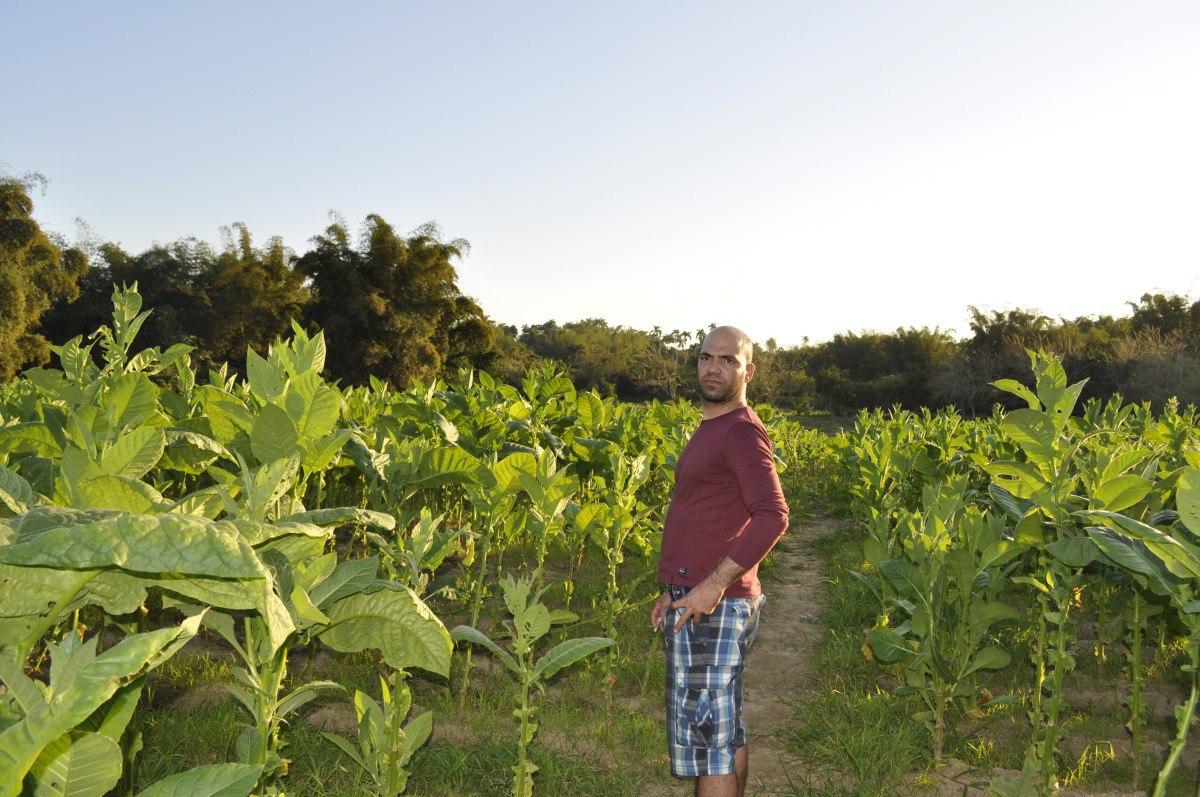 Tabachny plantatcii Cuba (7)